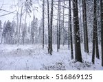 Snowy Forest At Winter. Russia