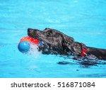 Stock photo  a dog having fun at a local public pool 516871084