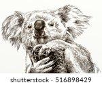 koala | Shutterstock . vector #516898429