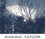 Sun Peeking Through Gloomy Trees