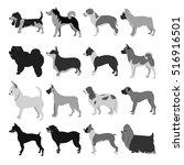 set of dog breeds | Shutterstock . vector #516916501