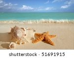 sea shells starfish on tropical ... | Shutterstock . vector #51691915
