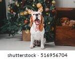 Beautiful Beagle Dog Posing As...