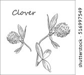 clover flower. hand drawn... | Shutterstock .eps vector #516997549