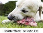 canis lupus familiaris   a... | Shutterstock . vector #517054141