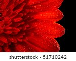 Red Daisy Gerbera On Black...