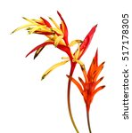 Red And Orange Heliconia Flowe...