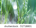Abstract of grass fresh with raindrops after a Spring rain. - stock photo