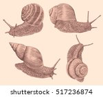 Snails Crawl. Hand Drawn...