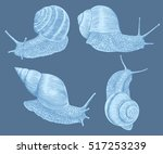 snails crawl. hand drawn... | Shutterstock .eps vector #517253239