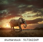 elephant with trunks and big... | Shutterstock . vector #517262269