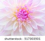 Closeup Of A Single Flower Hea...