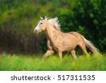 Horse With Long Blond Mane Run...