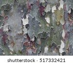 Colorful Tree Bark As Seamless...
