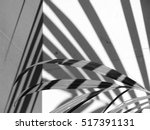 Black And White Palm Leaf With...