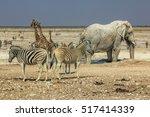 Zebras Elephants Giraffes...