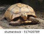 close up africa spurred... | Shutterstock . vector #517420789
