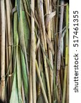 natural texture of the cane.... | Shutterstock . vector #517461355