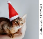 Small photo of Cute Abyssinian kitten in a Santa cap, holiday is coming