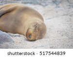 Baby Sea Lion Sleeping ...