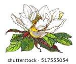 white magnolia flower in leaves ... | Shutterstock . vector #517555054