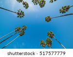 Palm Trees Seen From Below ...