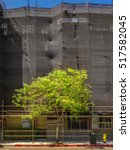 Small photo of Tree with bright green foliage grows beside a drab, colorless screened building renovation-in-progress. / Urban Arbor