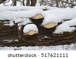 Bracket Fungus At The Tree...