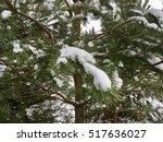 The Green Spruce Tree In Winte...
