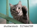 Stock photo cat playing and trying to hit the camera with paw looks like in prison 517666789