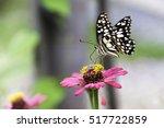 Closeup Butterfly On Flower In...