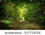 Stock photo nature 517725235