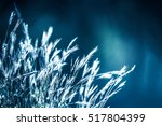 Grass Flowers On Winter With...