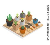 plant cactus in many pot on... | Shutterstock .eps vector #517851001