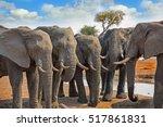 Six Elephants Standing Lined U...