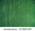 green country field with row... | Shutterstock . vector #517887199