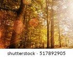 colourful autumn woodland scene ... | Shutterstock . vector #517892905
