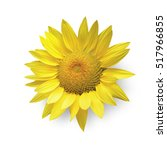 Sun Flower Isolated On White...