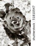 rock plant | Shutterstock . vector #51810547
