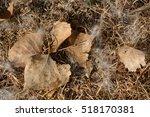 Wetlands Background Texture Of...