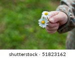 Child hand holding two daisy flowers in spring - stock photo