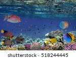 Colorful Reef Underwater...