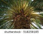 green  tropical palm forest | Shutterstock . vector #518258185