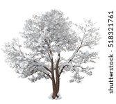 Snowy Winter Tree. Forked Trun...