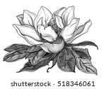 white magnolia tropical flower... | Shutterstock . vector #518346061