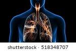3d illustration of trachea... | Shutterstock . vector #518348707