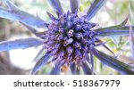 Small photo of close up of a blue/purple thistle flower amethyst eryngo - Eryngium amethystinum. one flower. horizontal.