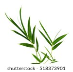 bamboo leaf isolated on white... | Shutterstock . vector #518373901