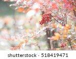 red fruits   Shutterstock . vector #518419471