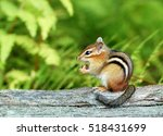 A Cute Baby Chipmunk Eating An...